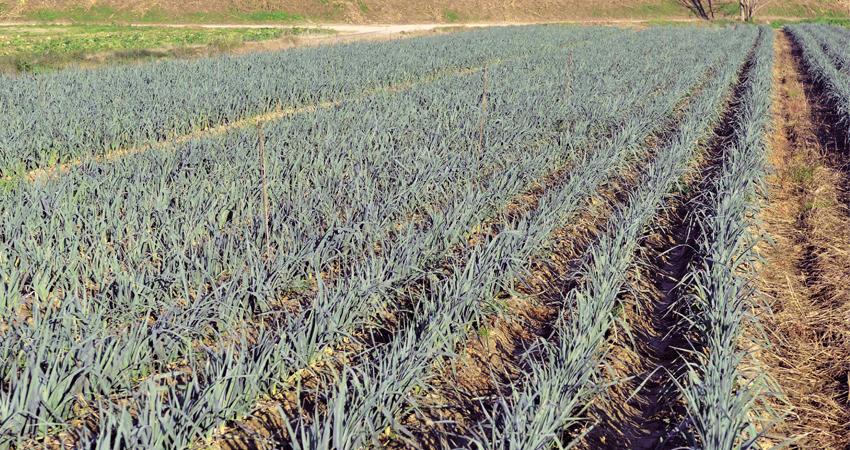 prodotti-agricoli-per-la-difesa