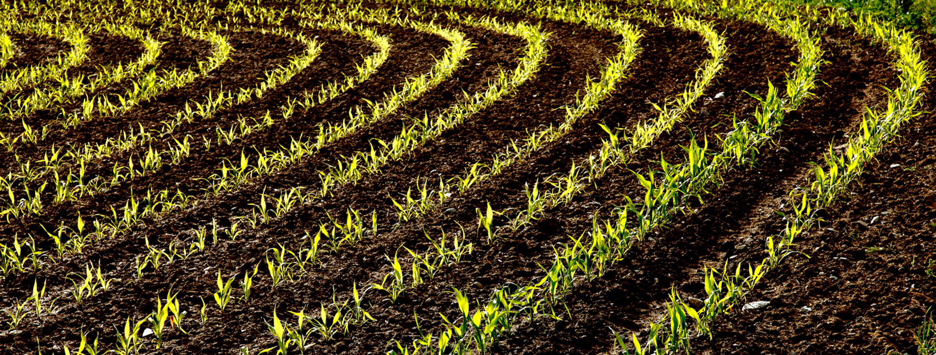 L'agricoltura al primo posto
