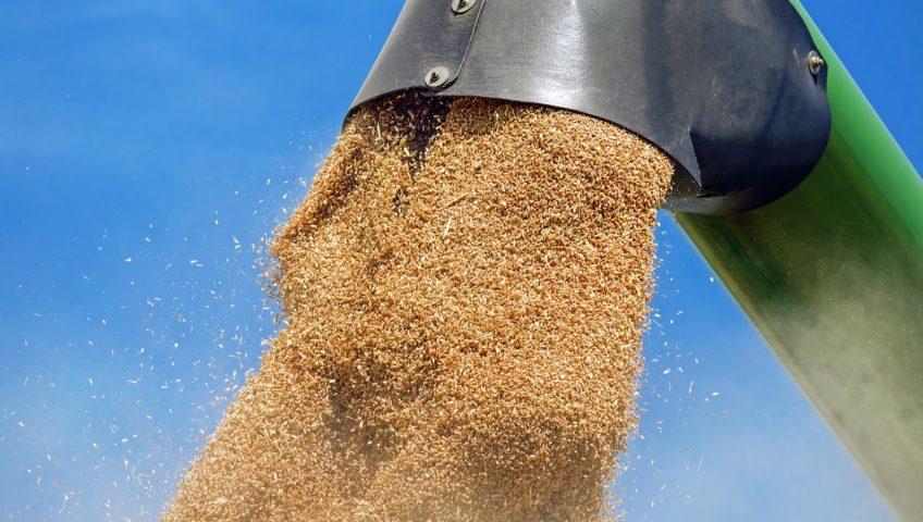 crisi dei cereali e del grano duro